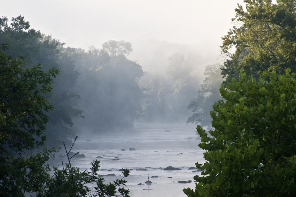 Summer Heron in the Mist