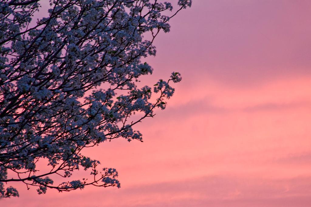 Pink Spring Sky