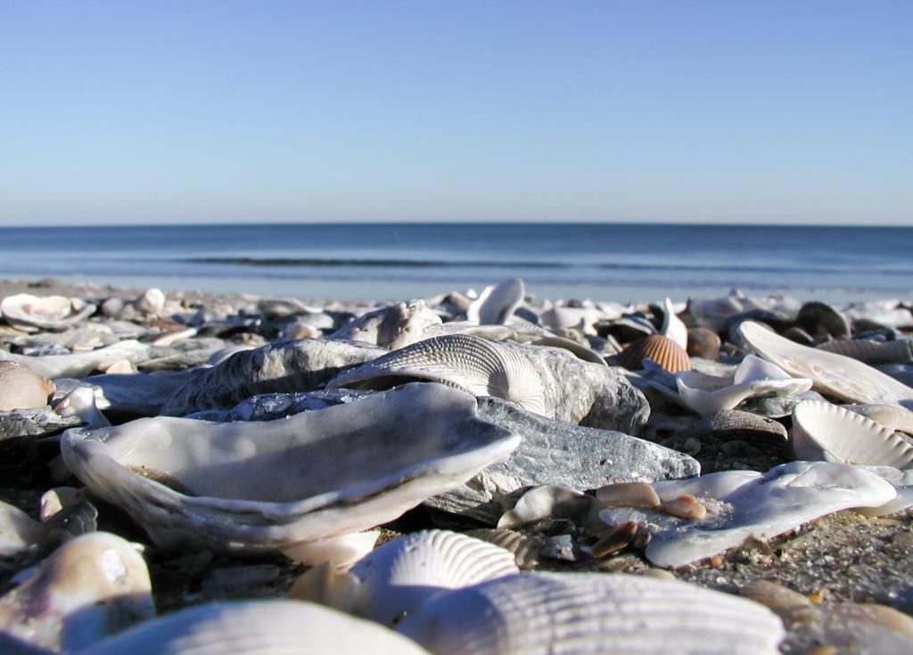 Shells on Edisto