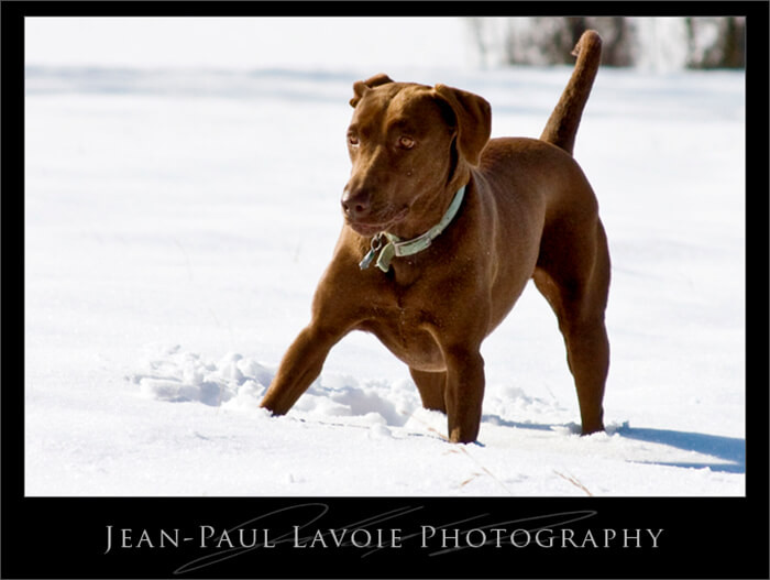 Snowy Gretna: Snow Dog