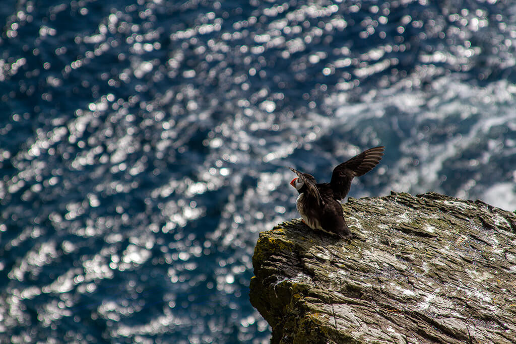 Skellig Michael: Taking Flight
