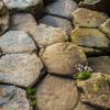 Giant's Causeway: Geometry