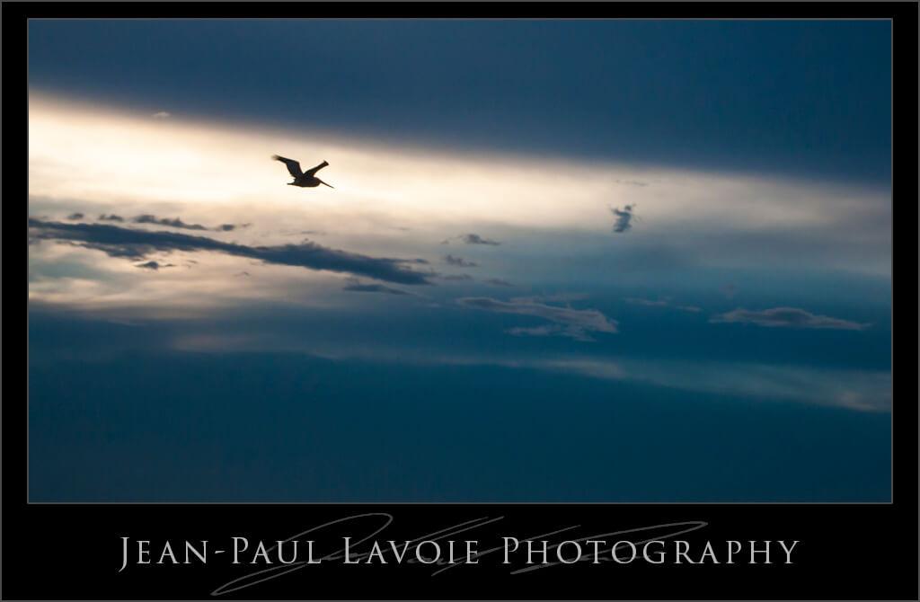 Flying in the Light.
