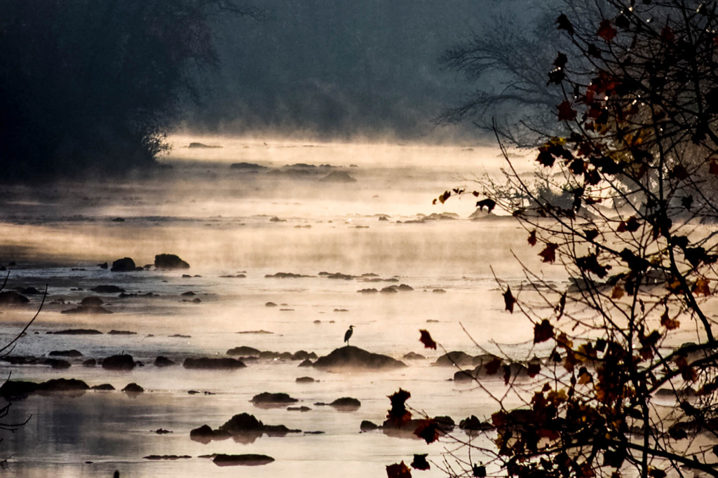 Fall Heron in the Mist