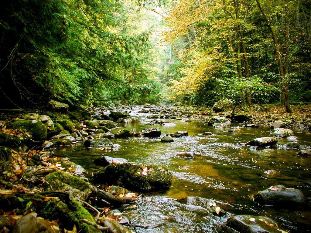 Laurel Fork River