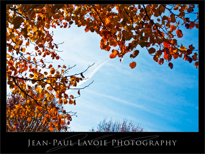 A closer look at Fall.